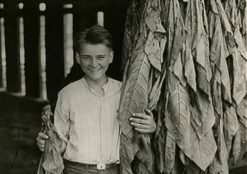 Calvin Coolidge Jr. with some tobacco leaves he harvested